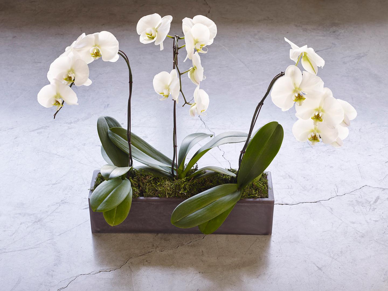 grey flower vase
